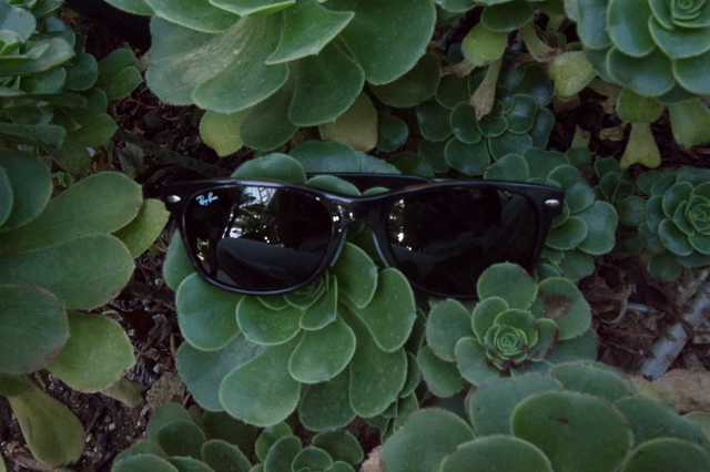 Detail: New Wayfarer by Ray-Ban
