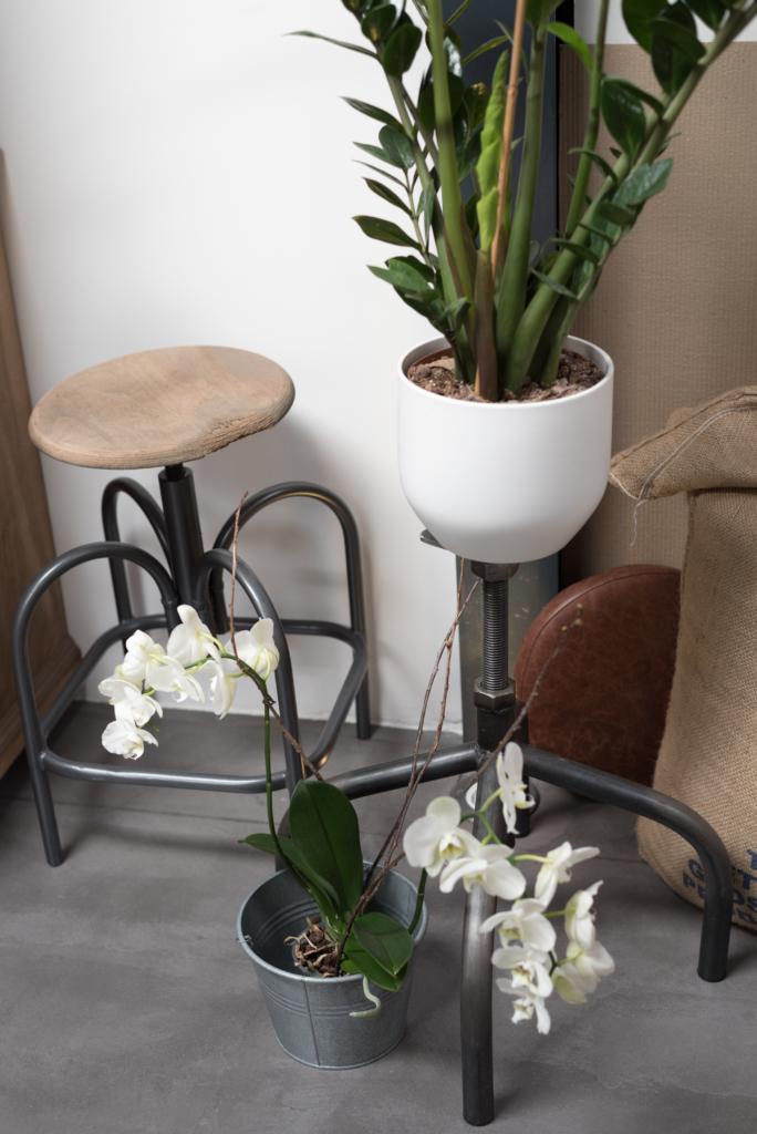 Details: plants at Café Ex Machina