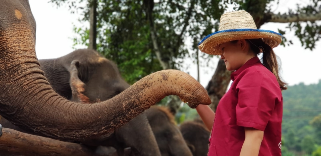 Claire Ketterer feeding an elephant